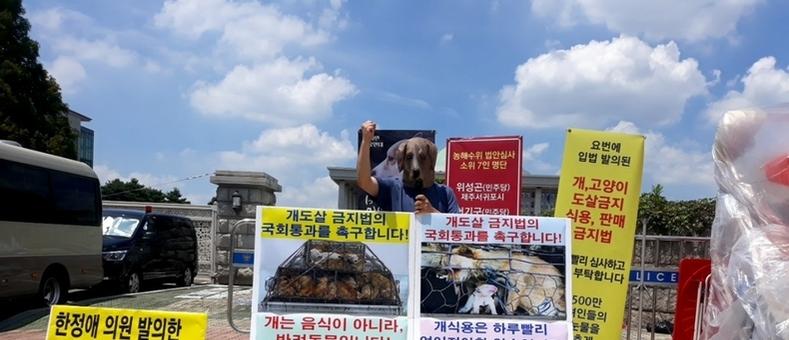 """21일 중복, 동물보호단체 1인 기자회견 """"개도살 금지법 제정하라"""""""